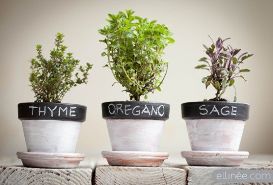 Herbs Are Very Easy To Grow With A Little Sunshine, Soil That Drains Well,  Some Watering, And A Little Fertilizer Or Compost. Herbs Can Be Grown In  Pots; ...